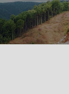 rainforest select.png