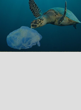 ocean cleanup select.png