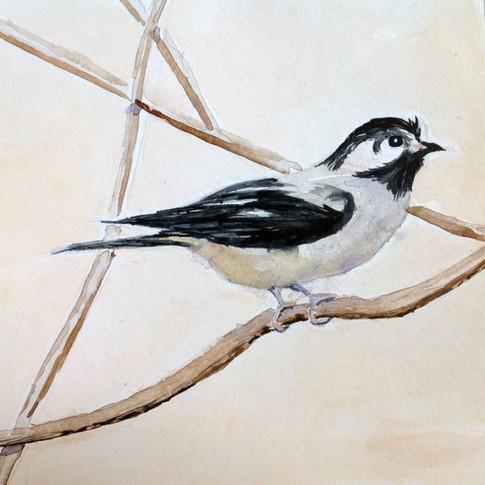 Jerry Art bird .jpg