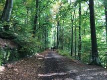 EAL_Trekking_Sentiero Bosco verde.jpg