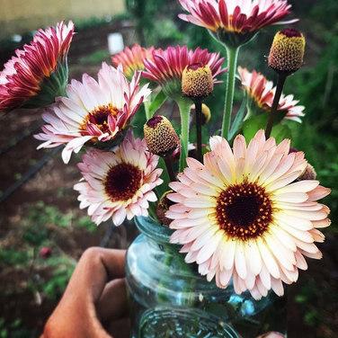 Buzz and Calendula Bouquet.jpg