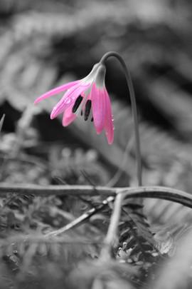 Seule La Fleur