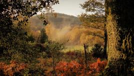 Rêve d'automne