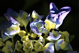 Fleur en éclosion 05