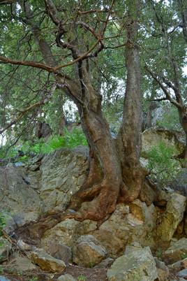 L'arbre et la pierre