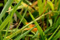 Cousin dans l'herbe