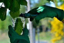 Le vert dans le verre