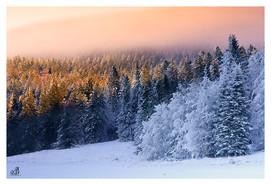 Vercors Forêt