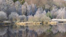 L'étang givré