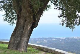 Sous l'olivier