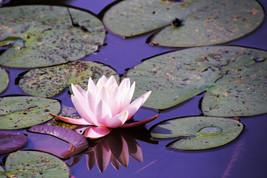 Nature-fleur
