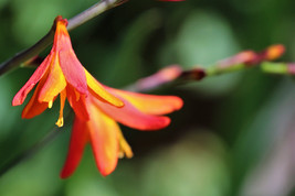 Fleur en éclosion 01