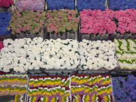 Pays Bas - aquarelle florale