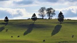 Les ombres longues à Nespoux.JPG