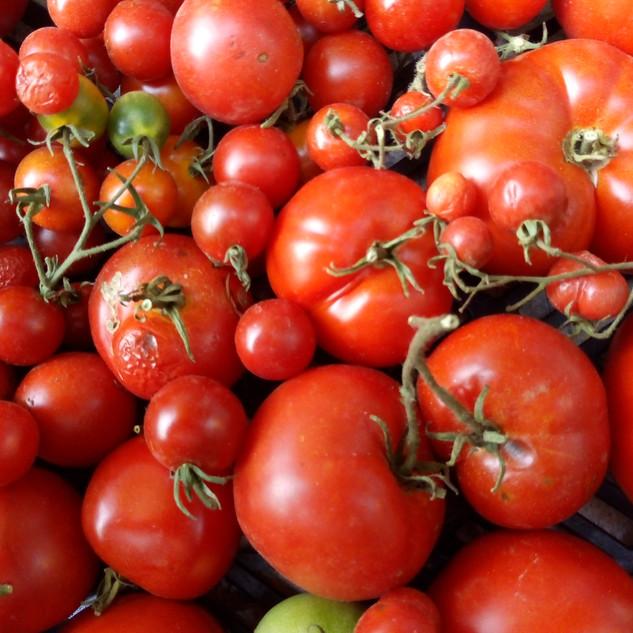Danielle tomate