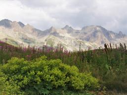 Au jardin du Lautaret