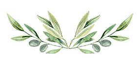 olive branch (1).jpg