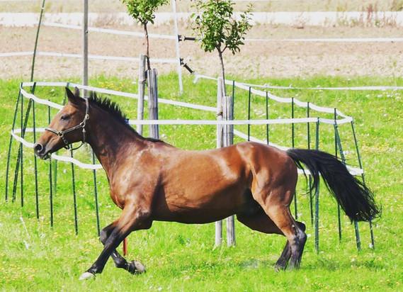 Pferd_1.jpg