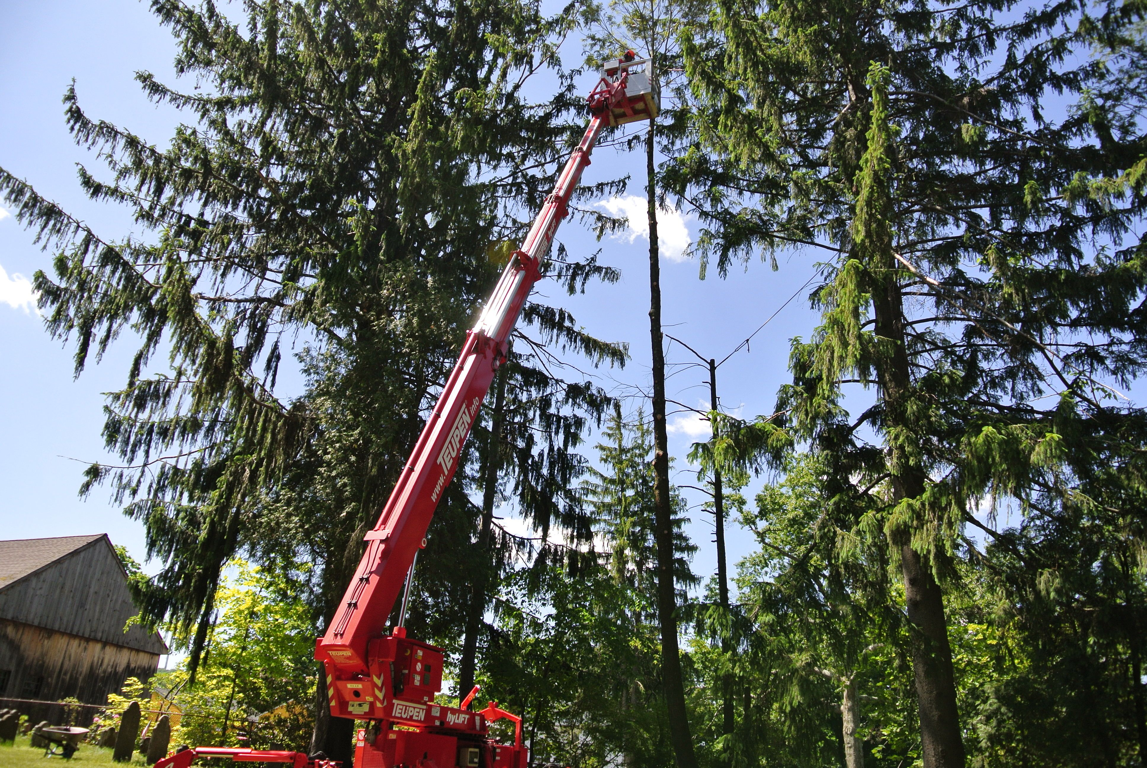 Woodlands Tree Removal 1.jpg