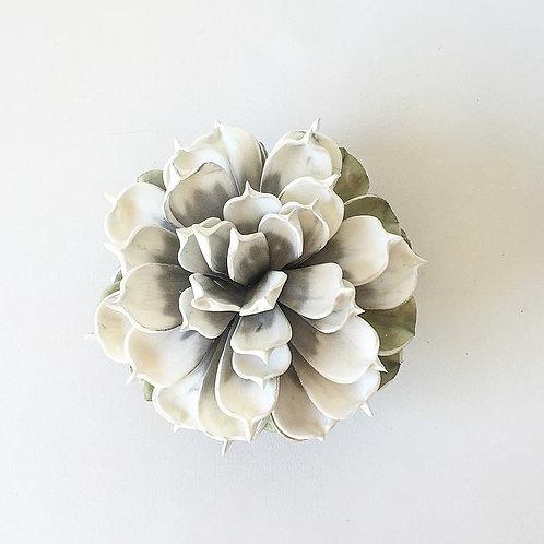 Large Magnolia Wallflower