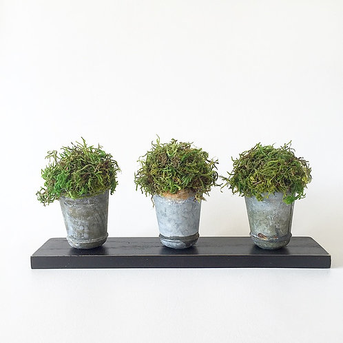 Triple Moss Canister