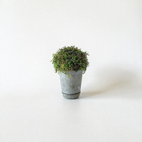 Single Moss Canister