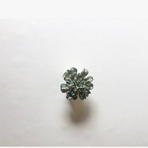 Small Green Flower with White Box