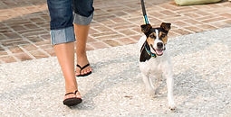 Dog Control supports Town leash law