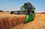Combining wheat field