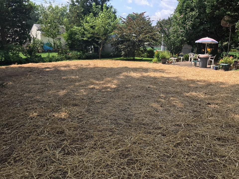 After Removal in Warminster, PA | Robinson Landscape