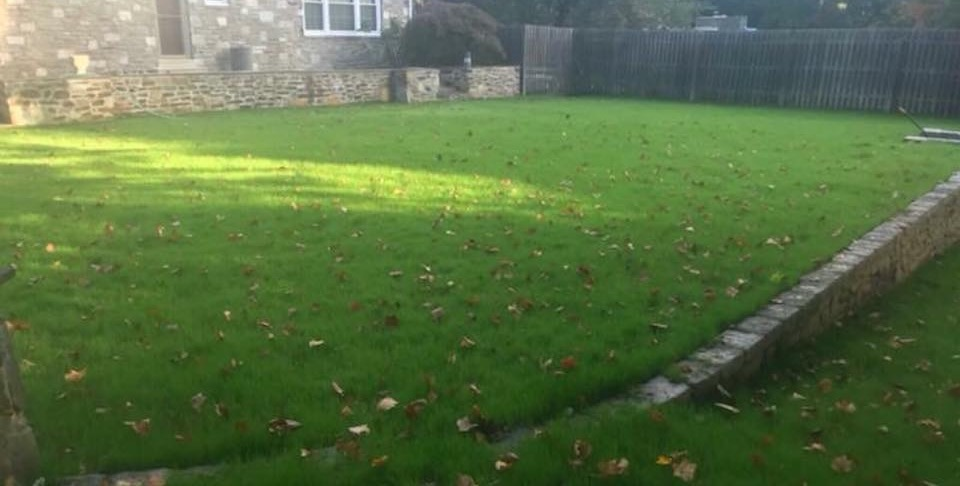 After Removal in Abington, PA | Robinson Landscape