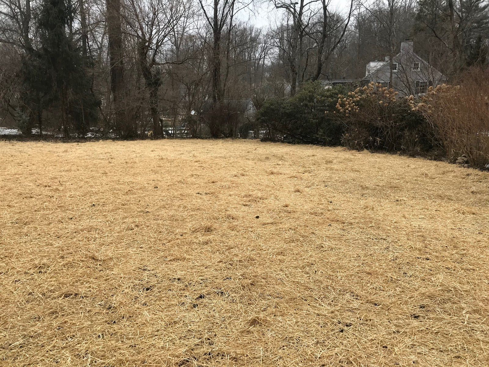 After Removal in Radnor, PA | Robinson Landscape