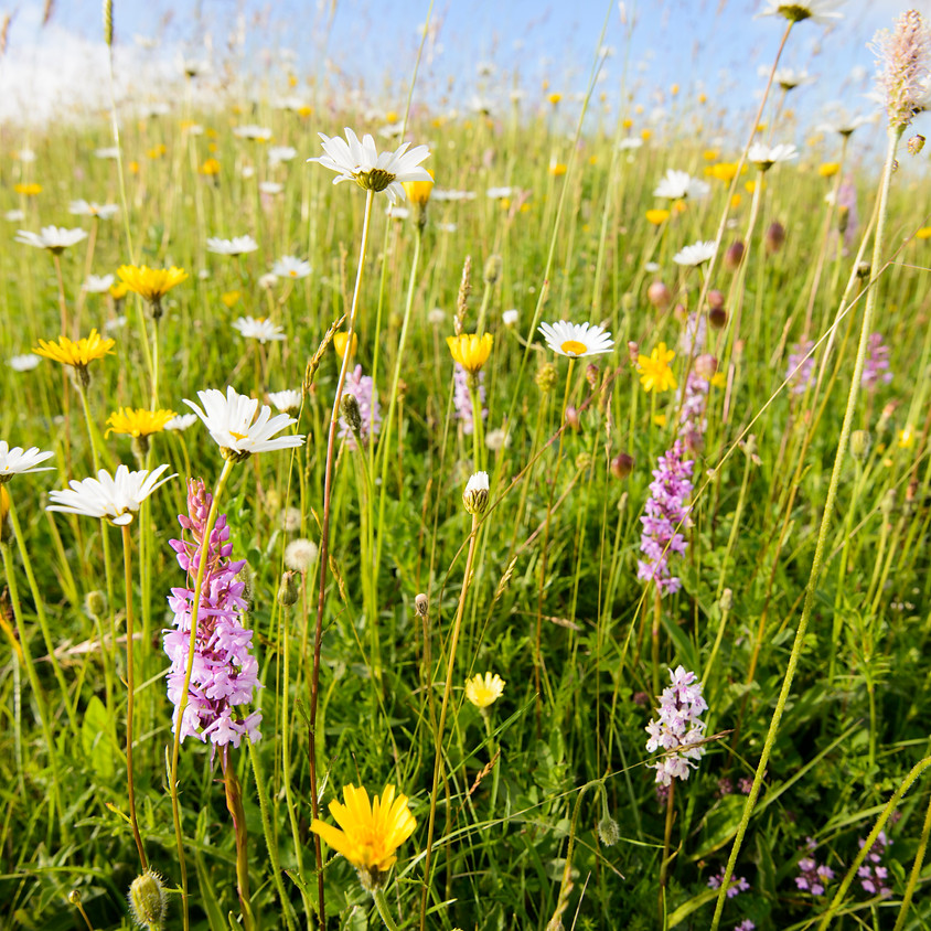 British Flora and Fauna Workshop