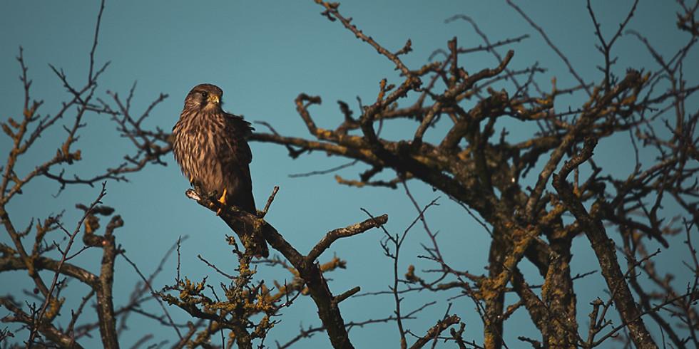 Birds of Prey Workshop (Native Species)