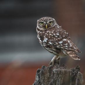 Little Owls at Eastbrook - An Emotional Rollercoaster