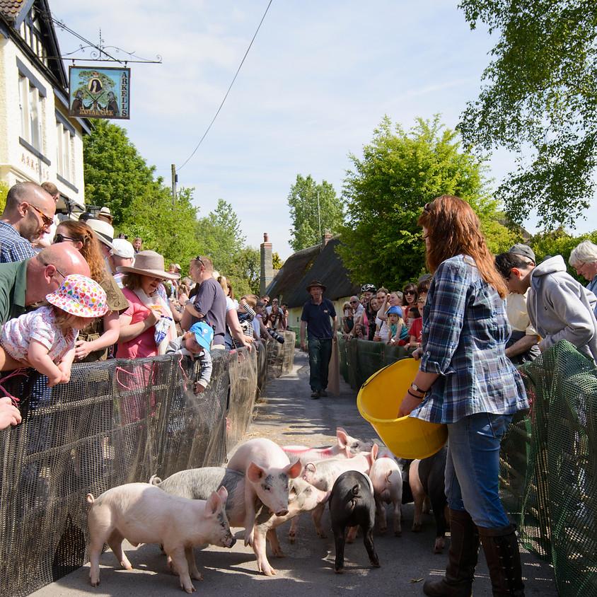 International Pig Racing Festival 2020