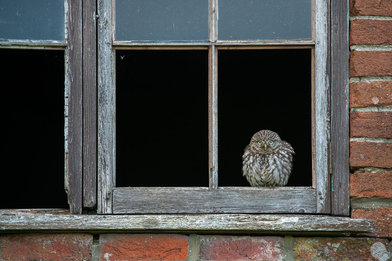 Little Owl Hide - Duo