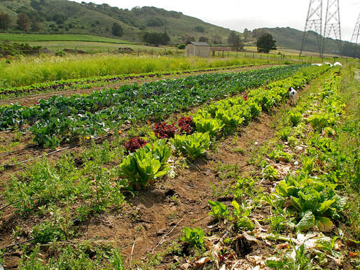 The Natural World-Local Community Supported Agriculture