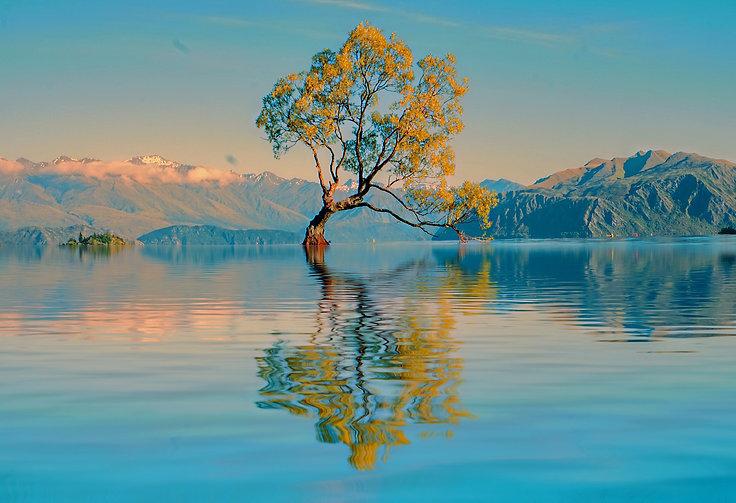 the-tree-LRNDRSJ.jpg