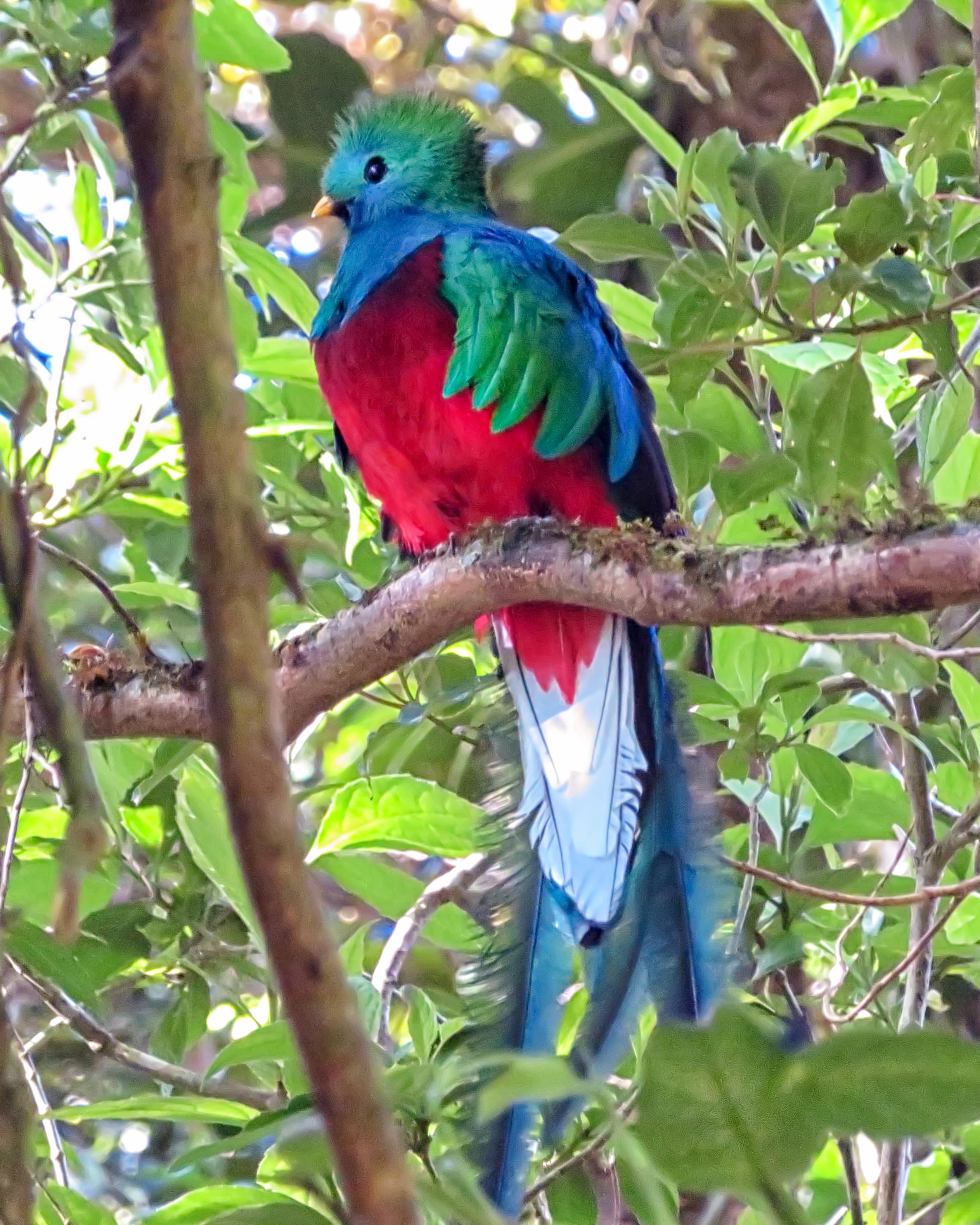 Quatzal