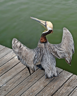 King of the Dock