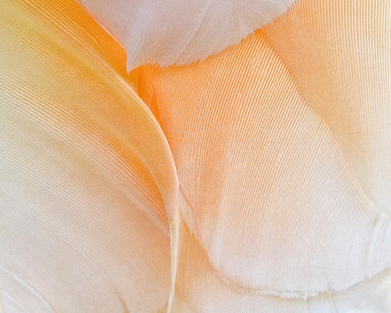 Linen Folds
