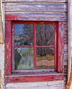 Beyond the Red Window