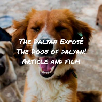 Discovering Dalyan - The Street Dogs