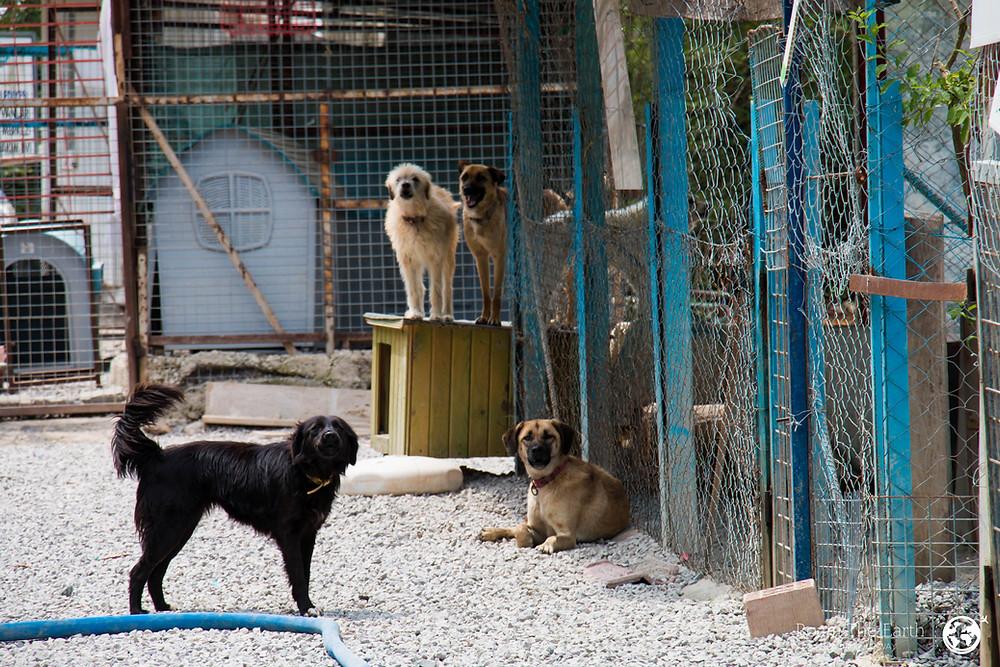 Dalyan Dog Shelter