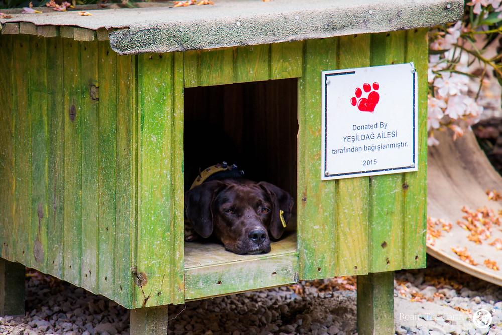 Dog Shelter Dalyan Turkey