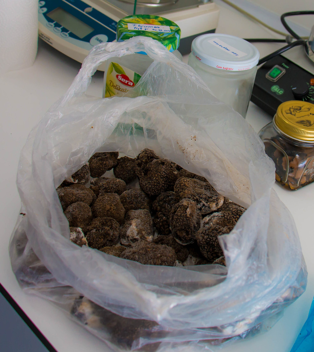 Truffles Galore