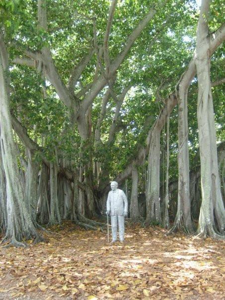 Edison and the Banyan tree