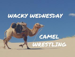 Camel Wrestling of Turkey