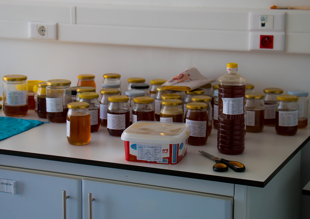 Pine Honey Testing